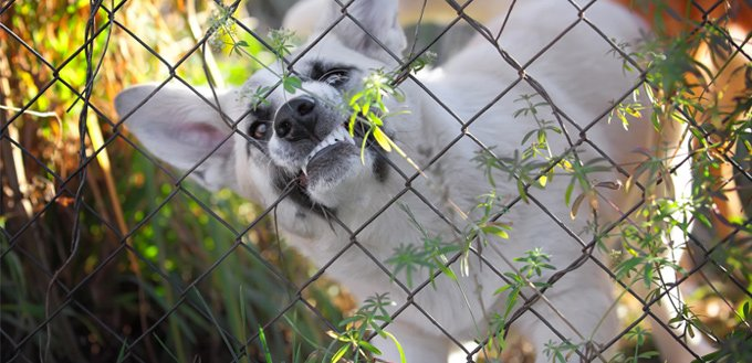 dog's source guarding