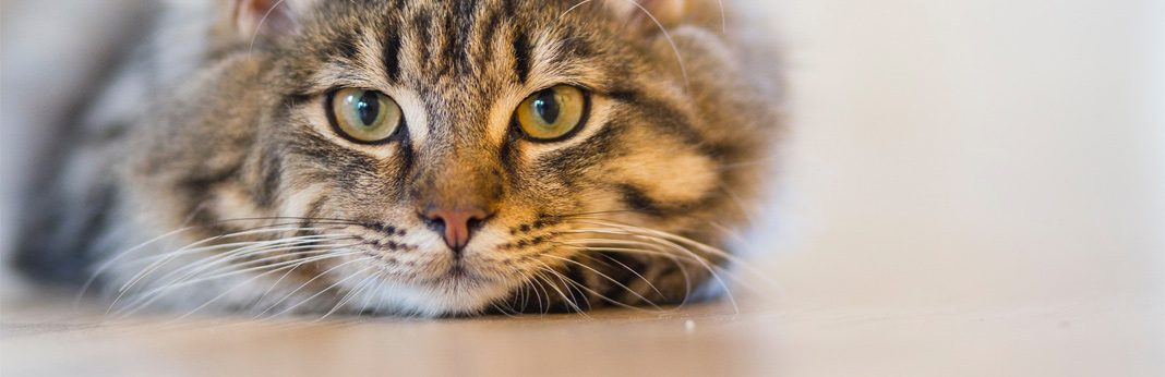 excessive urination in cats - causes and treatment