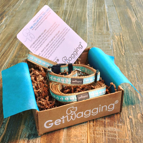 Get Wagging Box