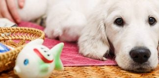 how to get knots out of dog hair
