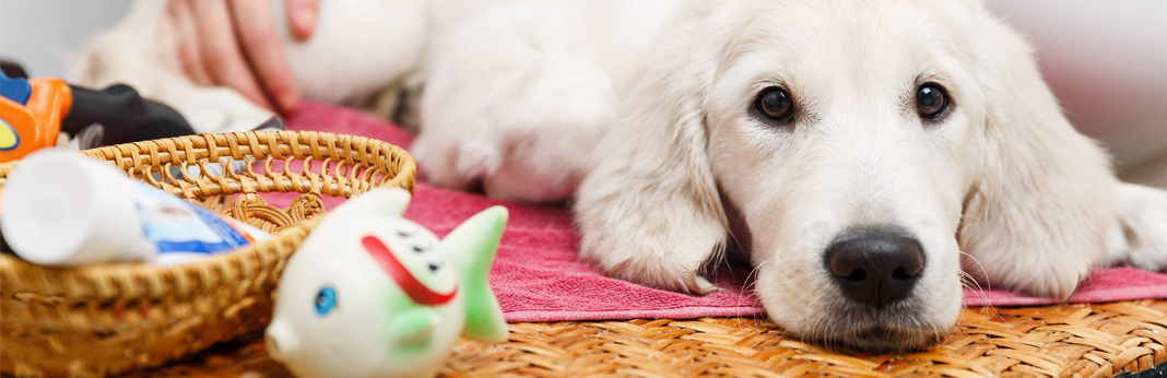 how-to-get-knots-out-of-dog-hair