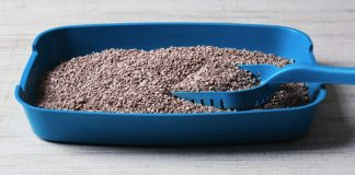 how to manage litter box odor like a pro