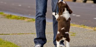 how to stop your puppy from jumping up