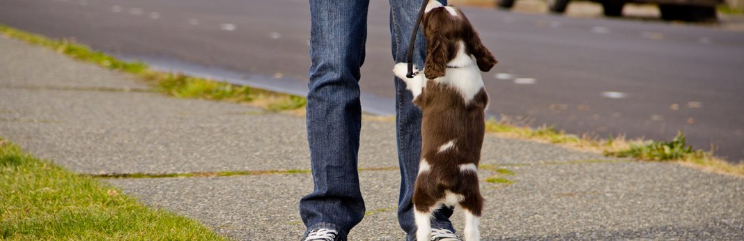 how-to-stop-your-puppy-from-jumping-up