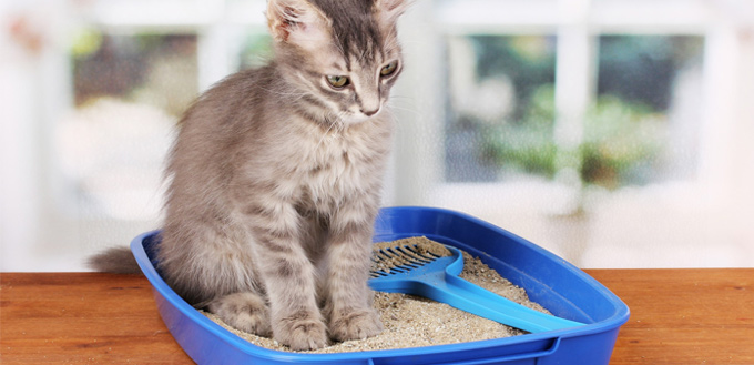odor in cat litter box