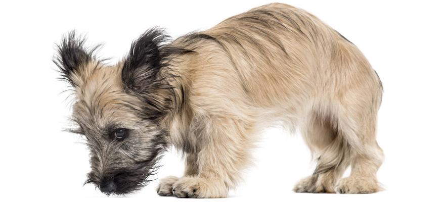 panic attack dog