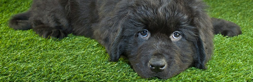 puppy-not-eating,-causes-and-advice