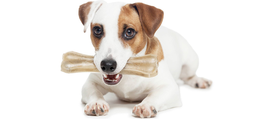 Best Rawhide For Dogs Of 2019 Review Buying Guide