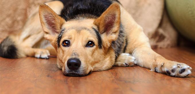 seizure in dogs