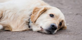 seizures in dogs - causes & treatments