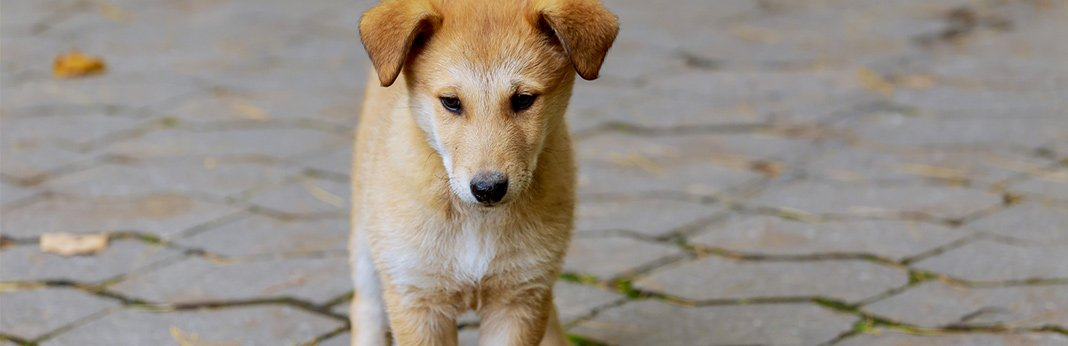 simple home remedies for mange in dogs