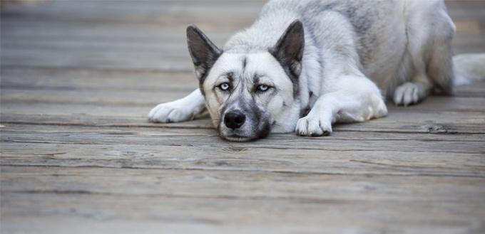 sleepwalk in dogs