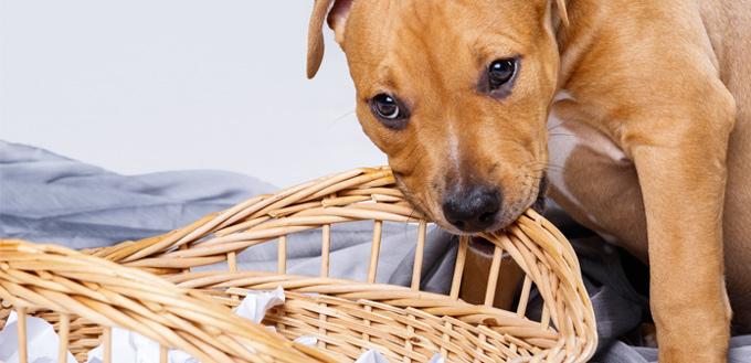 stop puppy chew