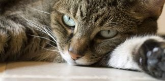 tips to help improve your cat's digestion
