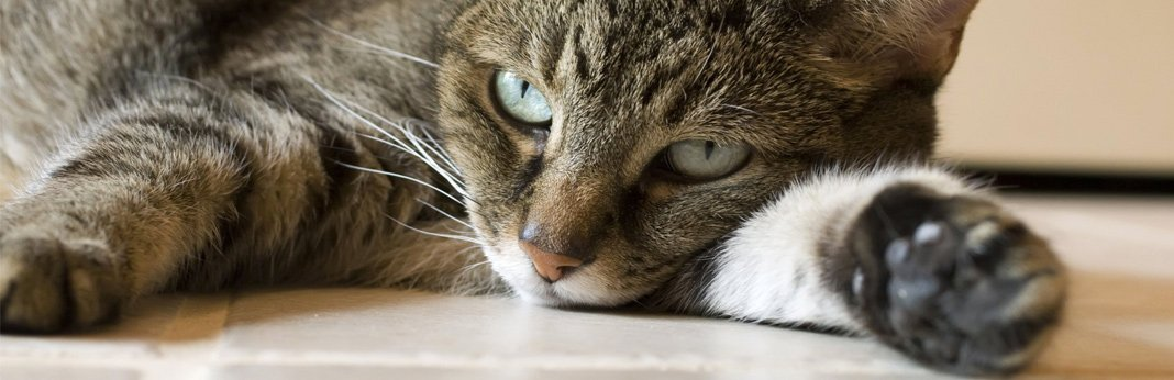 tips-to-help-improve-your-cat's-digestion