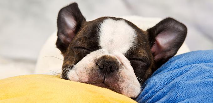 why dogs sleep a lot