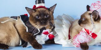 10 best costumes for cats