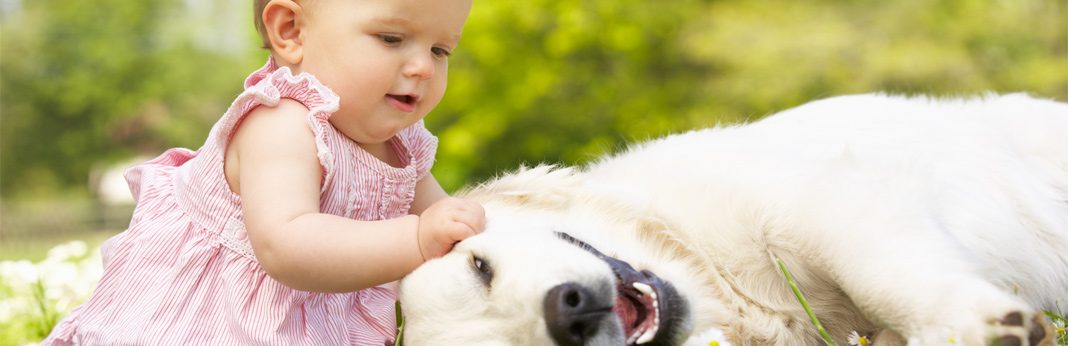 10 best dog breeds for babies