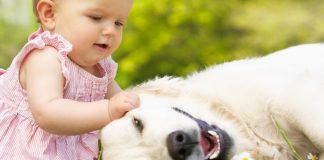 10 best dog breeds for babies