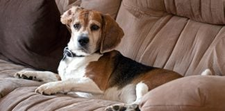 10 cleaning tips every dog owner should know