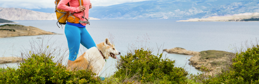 10-essential-tips-when-hiking-with-your-dog