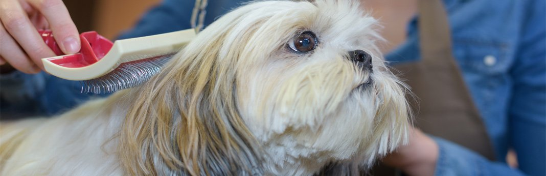 10 natural ways to minimize dog shedding