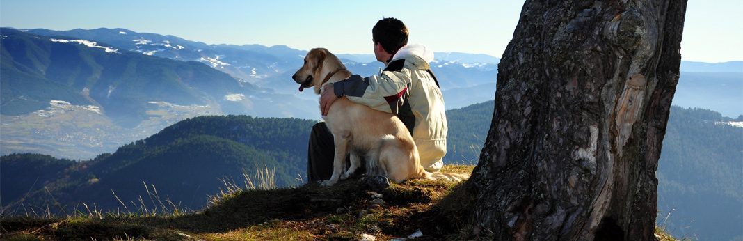 5 best dog breeds for single men