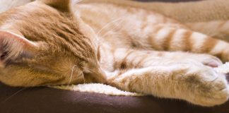 5 best heated cat beds