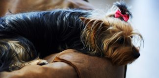 5 best heated dog bed