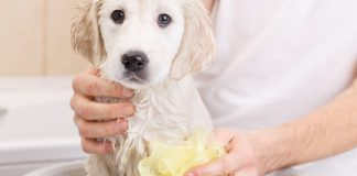 5 best medicated dog shampoos