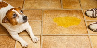 5 best pee pads for dogs
