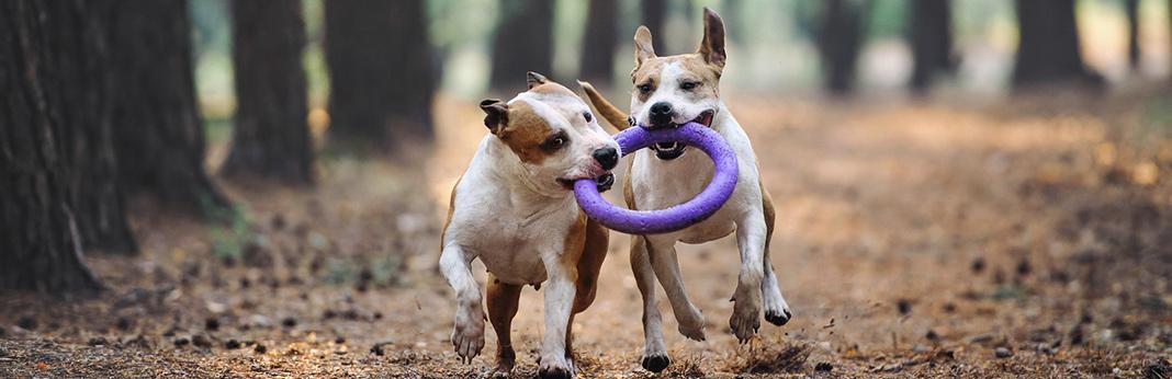 5-steps-to-calm-a-hyper-dog
