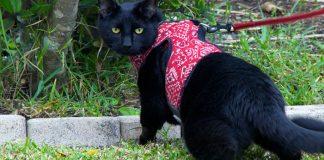 8 best cat harnesses