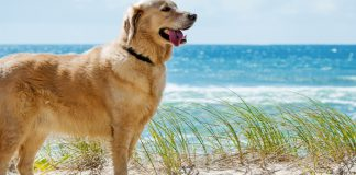 8 tips to keep your dog cool this summer