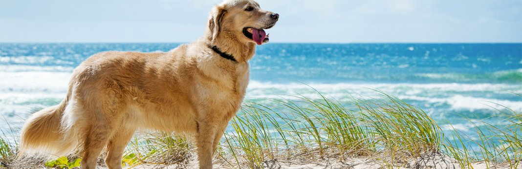 8-tips-to-keep-your-dog-cool-this-summer