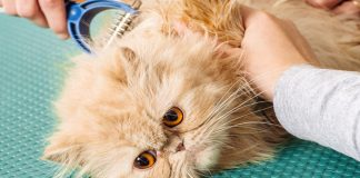 9 home remedies for cat hairballs