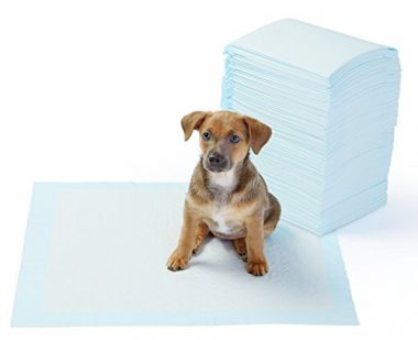 Pet Training and Puppy Pads by AmazonBasics