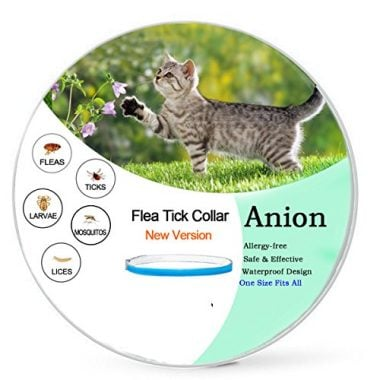 Flea and Tick Prevention for Dogs and Cats