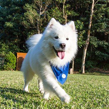 Smart Dog Tag Virtual Leash by DOTT