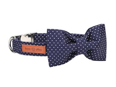Lionet Paws Dog and Cat Collar with Bowtie