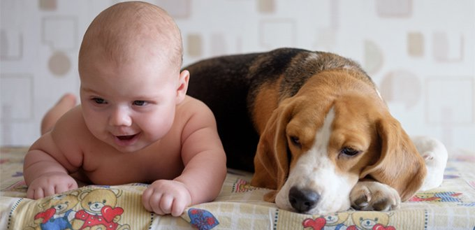 beagles for babies