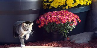 best cat houses