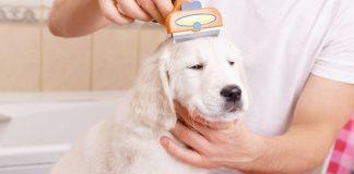 best dog flea comb