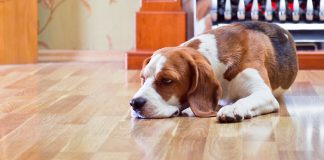 best heartworm medicines for dogs