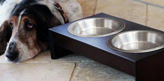 best raised dog bowls