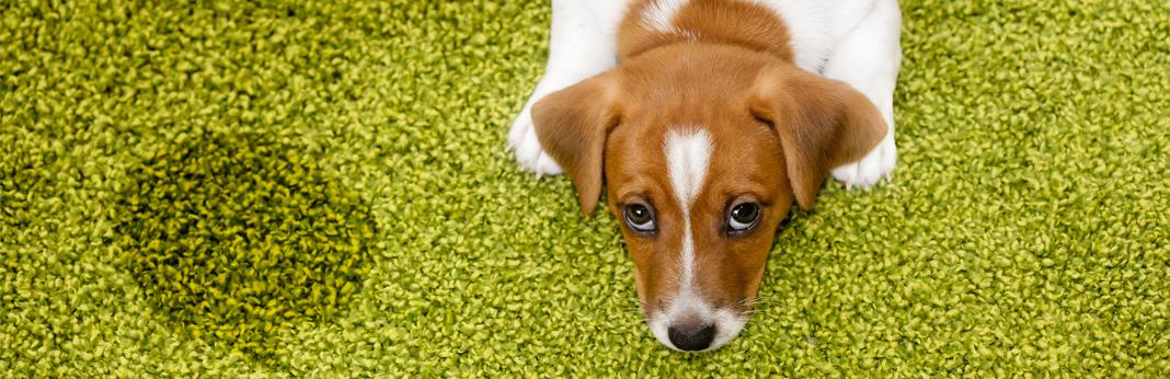 best-way-to-potty-train-your-dog