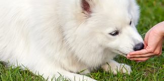 bland diet for dogs - how and when to use them
