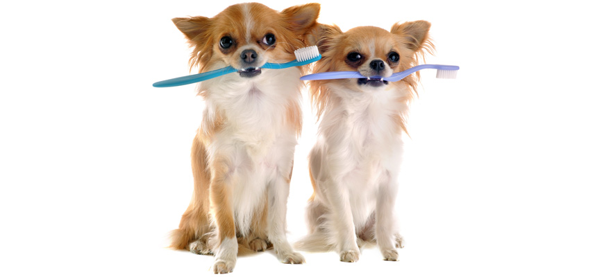 canine toothbrushes