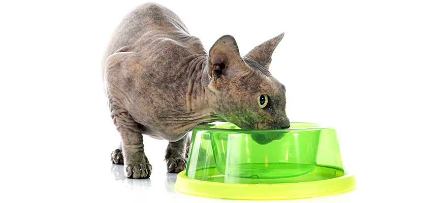 cat drinking water from a bowl