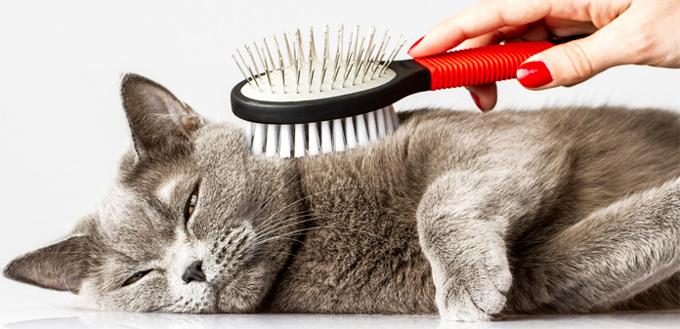 cat grooming - hairballs